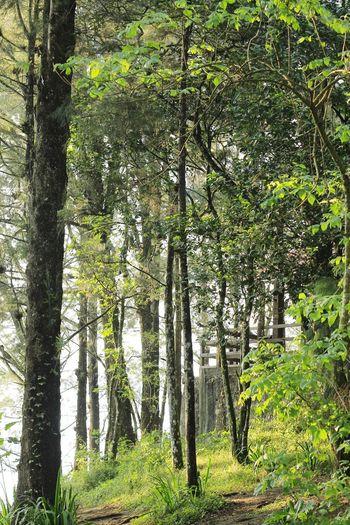 Forest 3 Cerrodelborrego Trees Green Vereda Bosque Canont3 Arboles Camino Road