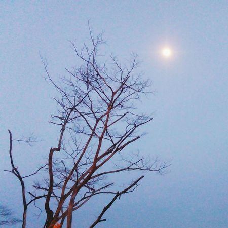 When moon rise.. Moon Deadtree Eveningsky Tanjungputeri Johor Malaysia Walking Around
