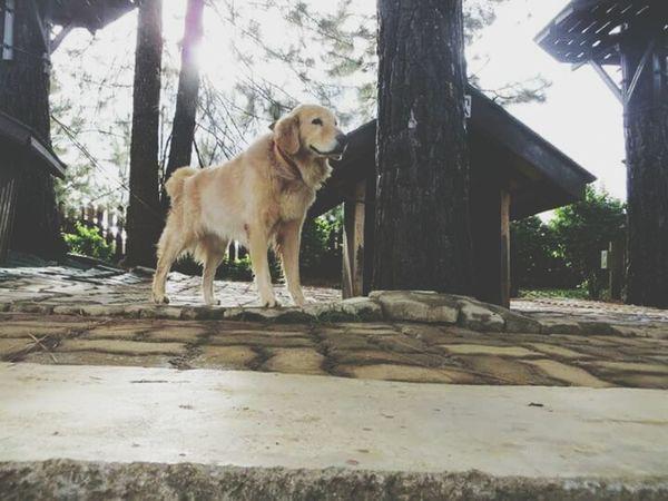 Panini❤ Doglover