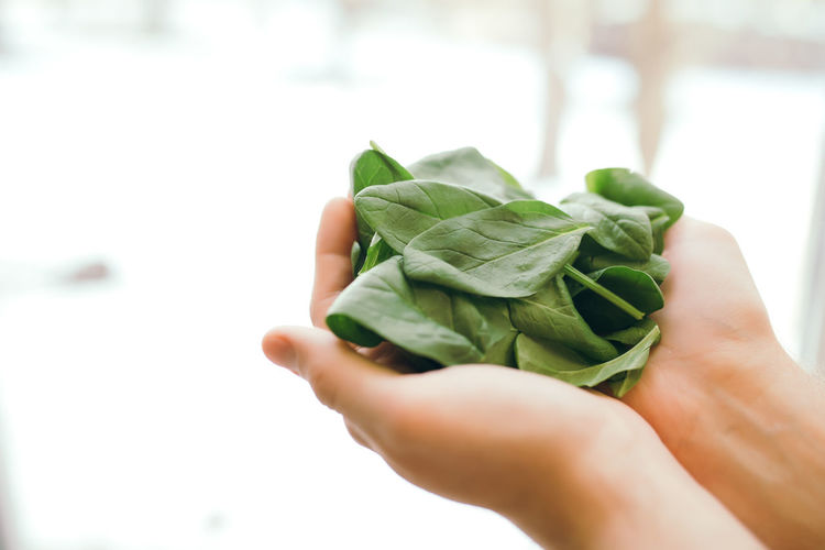 Hands holding fresh green salad leaves of spinach on blurred background. healthy vegetarian eating