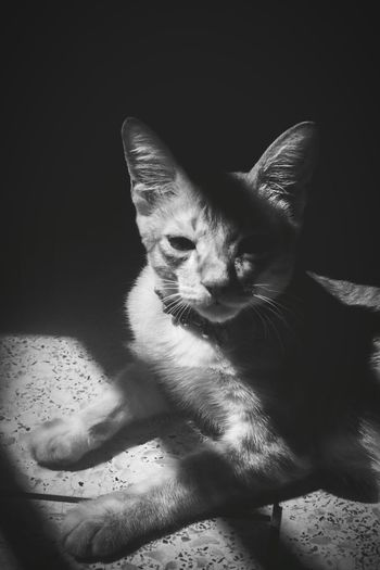 The remaining of Cat Days Catsoftheworld Catlifestyle Experimenting Cats Of EyeEm Catportrait Catbeauty Gingercats Catsoneyeem Catsofeyem Blackandwhite Light And Shadow EyeEm Bnw EyeEm Animal Lover Cat Watching Close-up Animal Themes Indoors  Pets Cat Eyes Animal Photography EyeEmNewHere Welcome To Black Long Goodbye Resist The Secret Spaces EyeEm Diversity Art Is Everywhere The Photojournalist - 2017 EyeEm Awards The Great Outdoors - 2017 EyeEm Awards The Street Photographer - 2017 EyeEm Awards The Portraitist - 2017 EyeEm Awards The Street Photographer - 2017 EyeEm Awards The Architect - 2017 EyeEm Awards Pet Portraits The Week On EyeEm Mix Yourself A Good Time Lost In The Landscape Connected By Travel