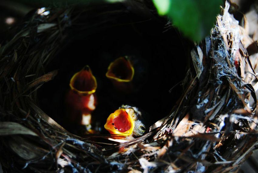 Nestlings Squabs Lovely Birds Nesting Birds Nest Cute Animals Curious Brave New World
