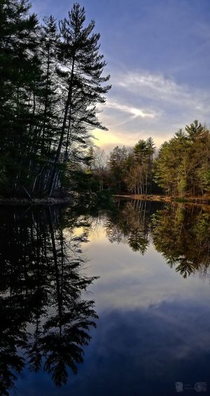 Happy Easter 🐰 EyeEm Best Shots Landscape EyeEm Nature Lover Tree Water Lake Reflection Sky Cloud - Sky Reflection Lake Standing Water Silhouette Sunset Sun Calm Branch