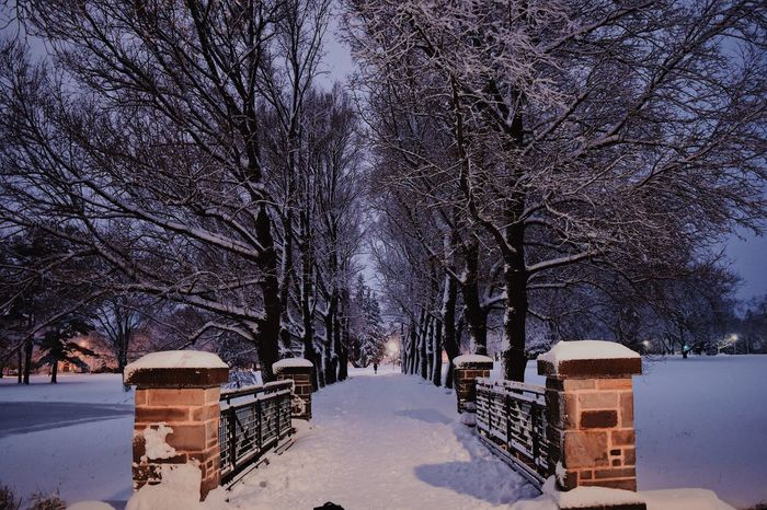 Winter Snow Cold Temperature Weather Tree Nature Bare Tree No People Outdoors Day Beauty In Nature Sky Architecture The City Light Neighborhood Map