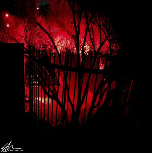 Silhouette trees against illuminated red lights at night