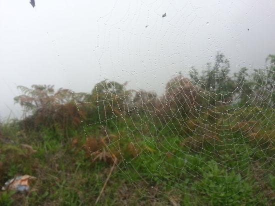 Spiderweb Highway Moisture Reallycold Facatativa