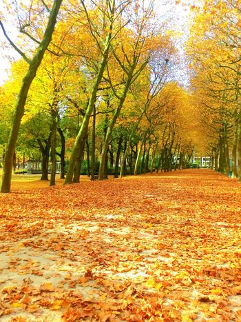 Autumn Beauty In Nature Brussel Bruxelles Change Day Leaf Nature No People Outdoors Parc Du Cinquantenaire Parco Park Scenics Tranquil Scene Tranquility Tree Yellow