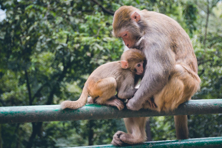 Animal Themes Animal Wildlife Animals In The Wild Ape Care Day Mammal Monkey Nature No People Orangutan Outdoors Primate Togetherness Tree Young Animal
