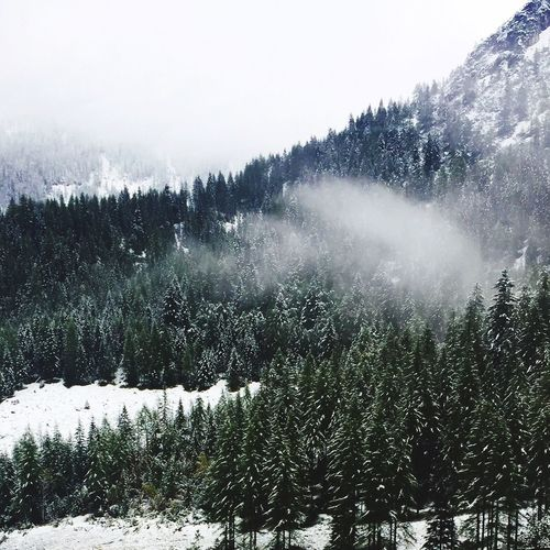 Puderzuckertannen Austria Alps Nature Cold Temperature Tree Snow Beauty In Nature Weather Outdoors Forest Landscape Mountain first eyeem photo