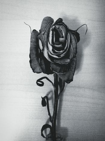 Haunting  Wither Grey Black Horror Dull Bleak Rosé Gothic Dead
