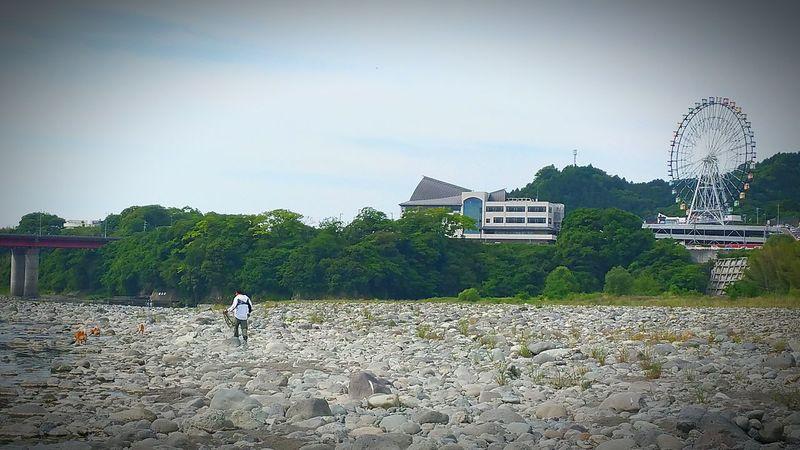 おはようございます。雨の静岡県富士市。我が家のわんこ達、今日は足が濡れてしまうので、お散歩を諦めモード。写真は一昨日の時のもの。富士川の河原を伸び伸びとお散歩します。普段こんなお散歩が出来るので、東名上り線富士川SAにあるドッグランへ行っても、物足りない様子の我が家のわんこ。彼らにとってもそうですが、私たちにとっても自然の中でお散歩出来るって幸せですね。雨、止まないかぁ〜、お散歩行きたいなぁ。 富士川橋 富士市 富士川楽座 富士川SA フジスカイビュー 明日天気になーれ 富士川観覧車 お散歩 富士川 Hello World