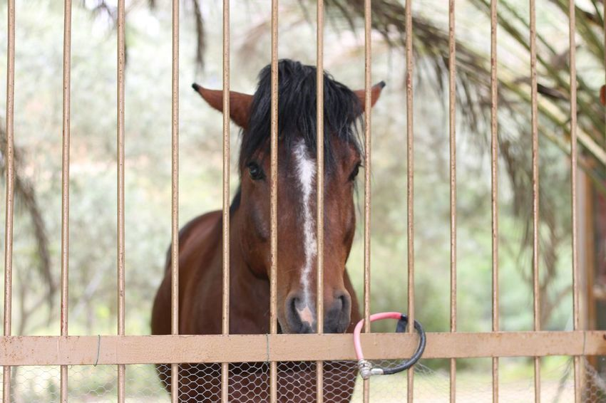 Horse Unhappy No People Animal Themes Animal Cyprus Horses Horse Photography  Horse Life Horselove Horse Love Animals Animal In Captivity Horse Eye Horse Eyes Horse <3 Horse Portrait Horselife Animal Head  Animal Photography Animal Body Part Animal_collection Animal Love Animal Portrait Animal Hair