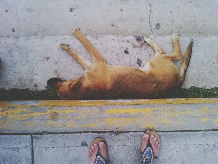 Relaxing (: Dog Days My Feet Dogs Dog Sleeping