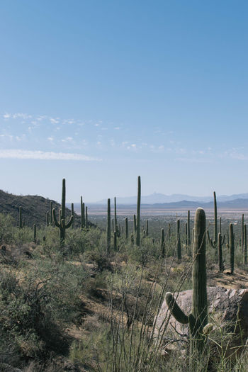 Arizona Cactus Desert Saguaro National Park Beauty In Nature Day Grass Growth Landscape Nature No People Outdoors Saguaro Saguaro Cactus Scenics Sea Sky Tranquil Scene Tranquility Wooden Post