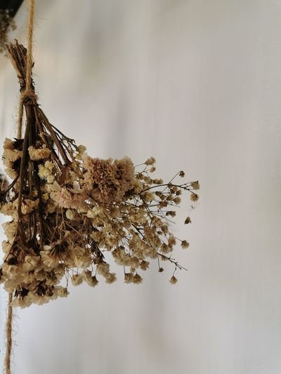 Close-up of dry flowering plant against trees