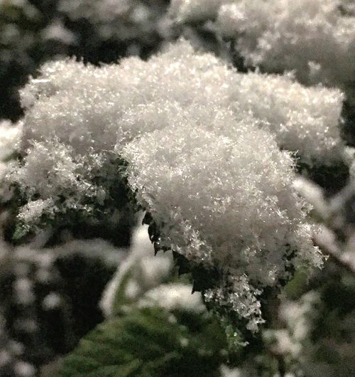 Seattle snow Snow Leaf Snowing Seattle Cold Temperature Nature Winter Tree