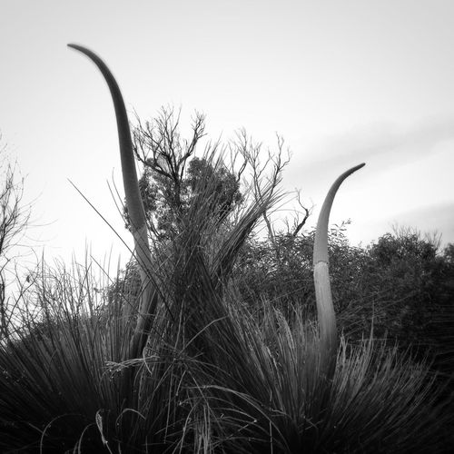 Black & White Nature IPSPlants IPhoneography