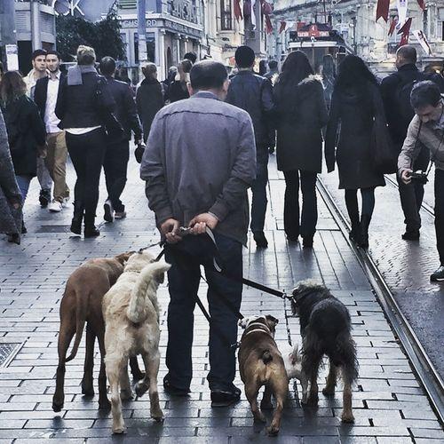 Köpek Gezinti Istiklalcaddesi Beyoğlu