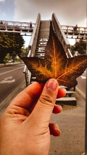 Mi táctica es mirarte, aprender cómo sos, quererte como sos.... -Mario Benedetti Bogotá Nature Autumn🍁🍁🍁 Colombia