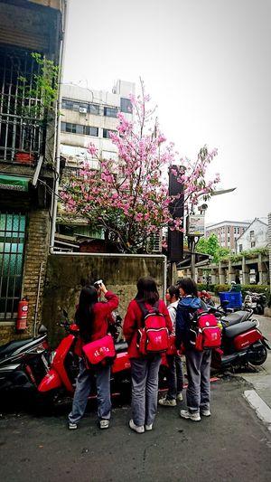 Urban Spring Fever 螳螂捕蟬