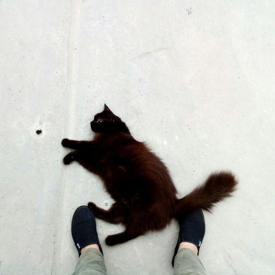 Pet Portraits Black Color Pets One Animal Animal Black Cat Portrait Cute Whisker Cats