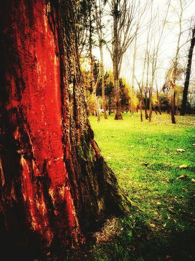 Tree Sunlight No People Nature Grass Growth Outdoors Day Close-up Animal Themes Sky BEYKOZAYRICALIKTIR. 😌😌😌 Beykoz, Turkey, Turkish, Istanbul, Asia, Asian, Middle East, Black Sea, River, Riva, Riva River, Water, Winter, Season