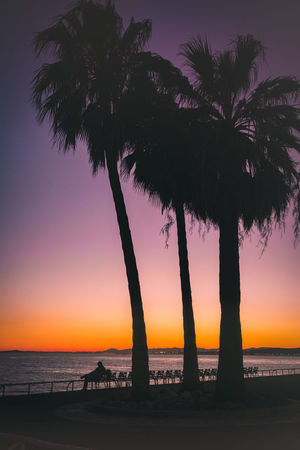I'm on my way Nice Traveling Travel Photography France Nice Shapes Tree Water Sea Sunset Beach Silhouette Purple Backgrounds Sky Horizon Over Water Calm Romantic Sky Atmospheric Mood Moody Sky Dramatic Landscape Tranquil Scene Orange Color Tranquility Dramatic Sky Poster Palm Tree Idyllic Scenics