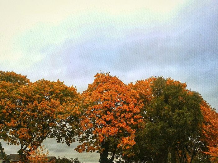 Tree Sky Nature Growth Beauty In Nature Orange Color Outdoors Day Autumn Fall