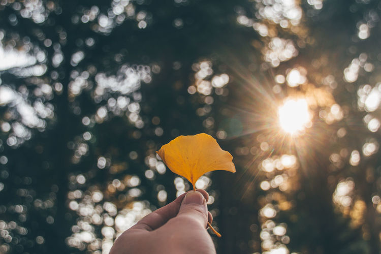 Cropped image of hand holding ginkgo leaf against sunbeams