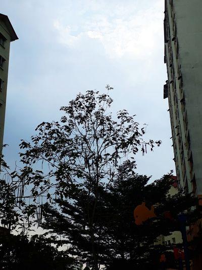 Sky High Tree Cloud Cloud - Sky Sky And Clouds Sky And Trees Trees Fruitful Fruitful Tree Cloudy Day Cloudy Sky Cloudy Sky Day Outdoors Low Angle View