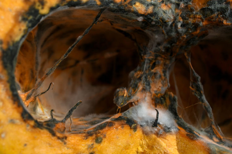 Close-up No People Tree Nature Wood - Material Selective Focus Brown Orange Color Outdoors Day Textured  Tree Trunk Dry Still Life Trunk Plant Full Frame Animal Wildlife Solid Fungus Cave Pumpkin Filament Spider