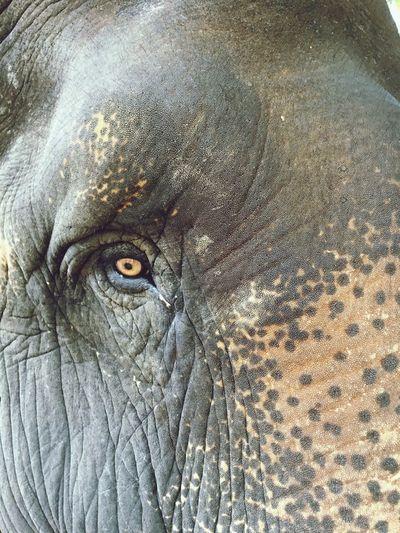 Eye of a tired elephant 🐘☹️ oOne Animalal wildlife] #Elephant #animal #wildlife #nationaleEye CCambodiaaAngkor Wat