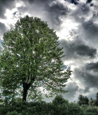 For The Love Of Trees ~ Clouds And Trees NEM Green The Illusionist - 2014 EyeEm Awards