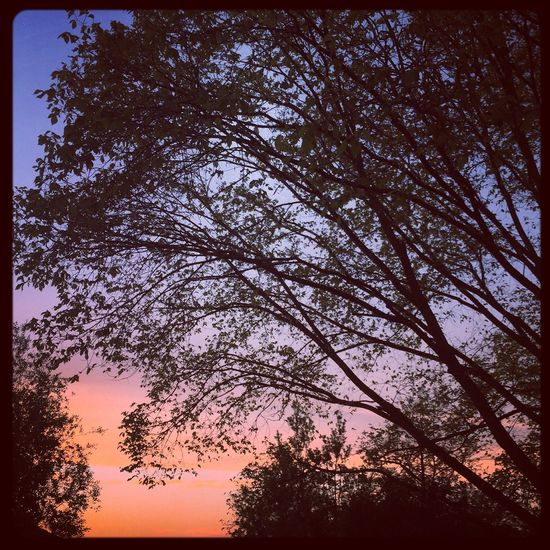 Finally home ❤️☀️🏡🙏🏼❤️ #home #sunset #thetreenextdoor #trees #prettyskies #prettysunset #theskysaworkofart #nature #love ❤️☀️🏡🙏🏼❤️ Home Sunset Thetreenextdoor Trees Prettyskies Prettysunset Theskysaworkofart Nature Love