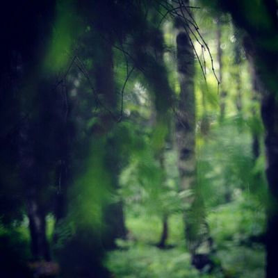 Forrest Spooky Zappanature Green trees whpbluronpurpose