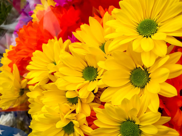 Happy Monday!! Beauty In Nature Blooming Close-up Day Flower Flower Head Flower Market Fragility Freshness Growth Nature No People Outdoors Petal Yellow