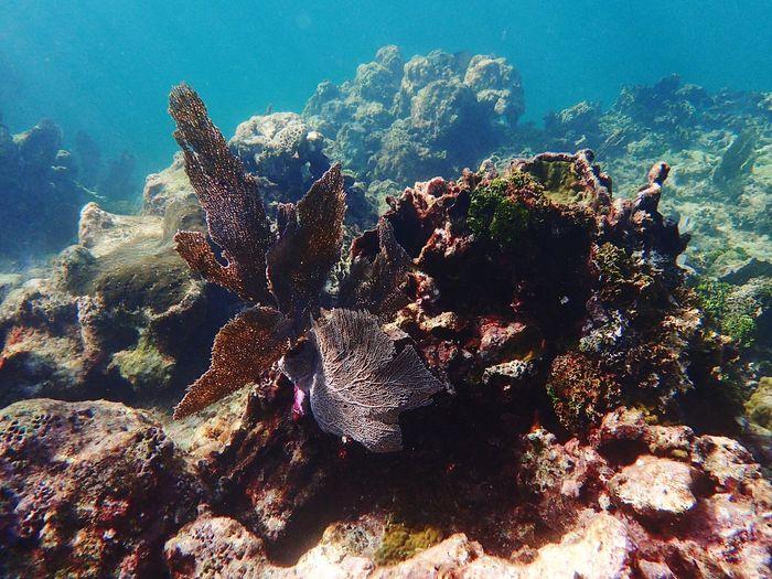 Corals in sea