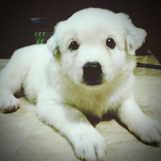 Pet Dog Cute Pets Ilovemydog
