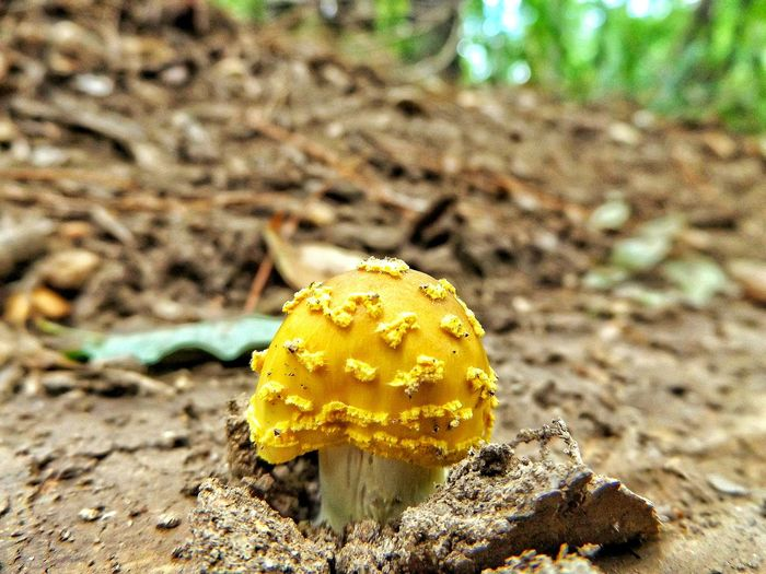 Shroomporn Shroomery Shroom Mushrooms 🍄🍄 Mushroom_pictures Mushrooms Toadstools Toadstool Fungi Fungi Growth Colour Of Life Nature Orange Dirt Earth Outside Outdoors