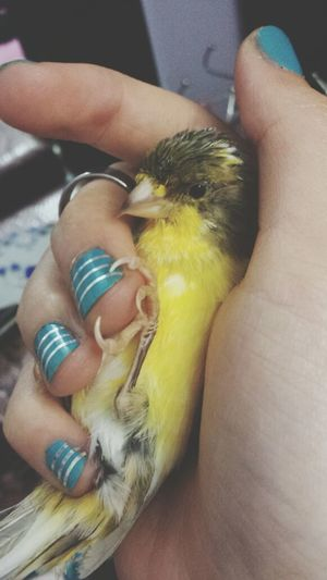 chilling all comfy in my hand :D
