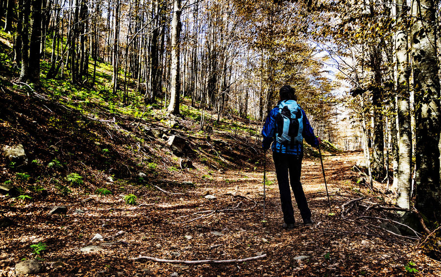 Adventure Backpack Beauty In Nature Day Dead Leaves First Spring Day Forest Full Length Hiking Leisure Activity Lifestyles Men Mountain Nature One Person Outdoors Real People Rear View Standing Tranquil Scene Tree Tree Trunk Walking Woman With Backpack Wood In Springtime