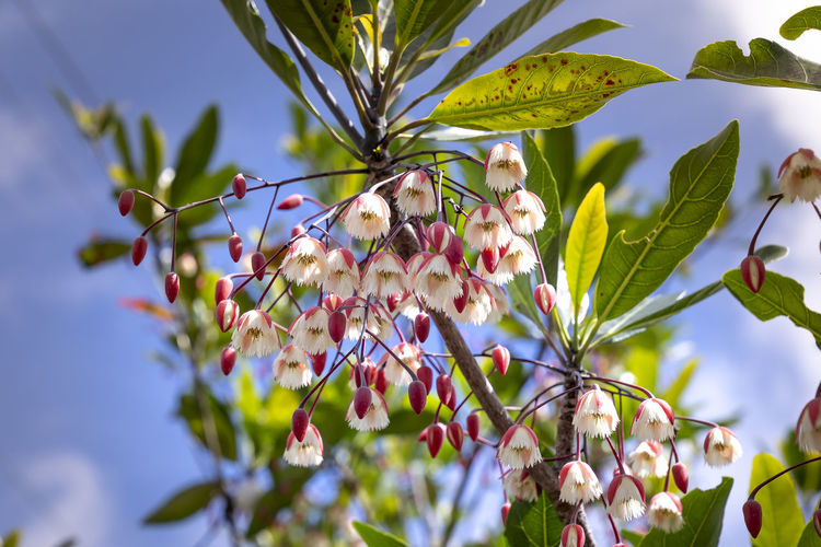 Low angle view of flowering plant on tree