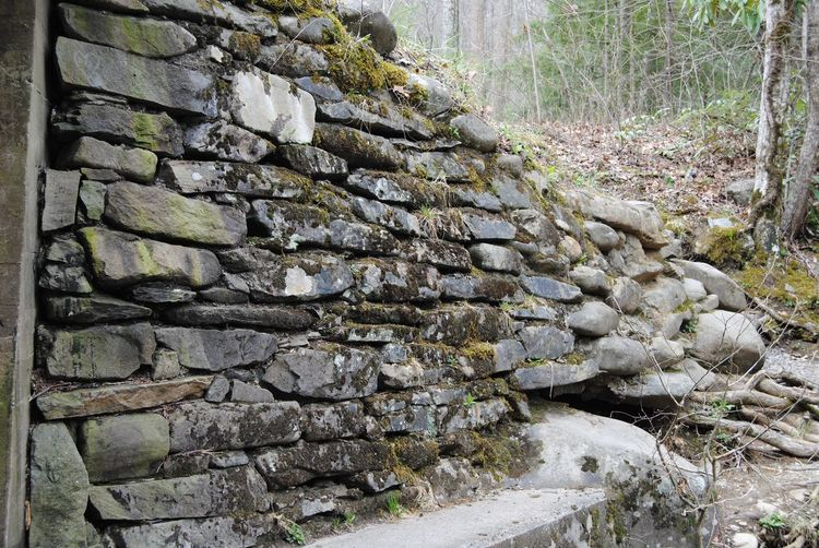 No People Day Nature Plant Tree Solid Forest Wall - Building Feature Stone - Object Close-up Built Structure Architecture Rock Growth Outdoors Stone Wall Wall Sunlight Wood - Material Moss Summer Exploratorium