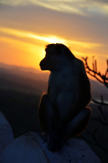 Animal Themes Animal Wildlife Animals In The Wild Beauty In Nature Bird Close-up Day Focus On Foreground Mammal Monkey Nature No People One Animal Outdoors Perching Sitting Sky Sunset