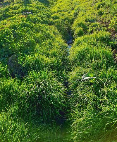 trawa Backgrounds Water Full Frame High Angle View Sunlight Soccer Field Grass Close-up Green Color