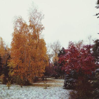 Nature осень Omsk Природа