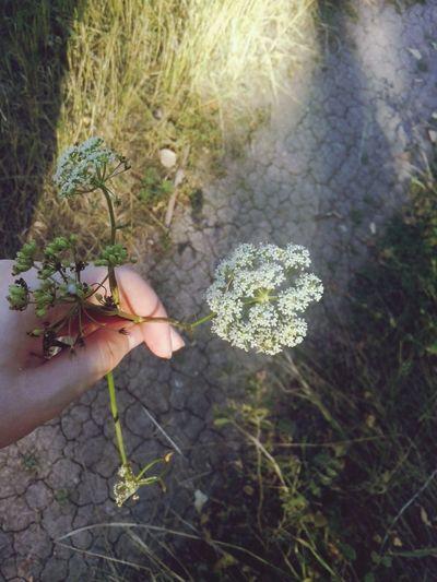 White Flower EyeEm Nature Lover