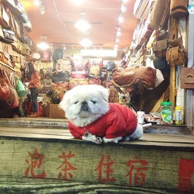 Too cute > <🐶 Market Market Stall Pets Animal Themes Happy :) Enjoying Life Animallovers Animal Love Animal_collection Cute Pets Cute♡ Cute Dog  Cutepets Cute Puppy Cuteeee♥♡♥