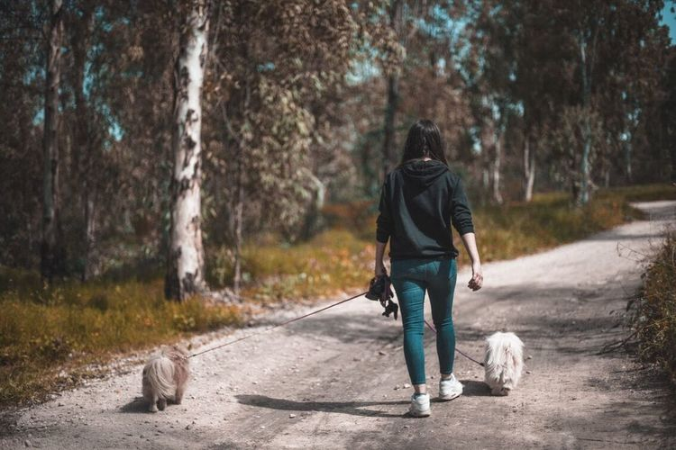 Rear view of woman with dog walking on road
