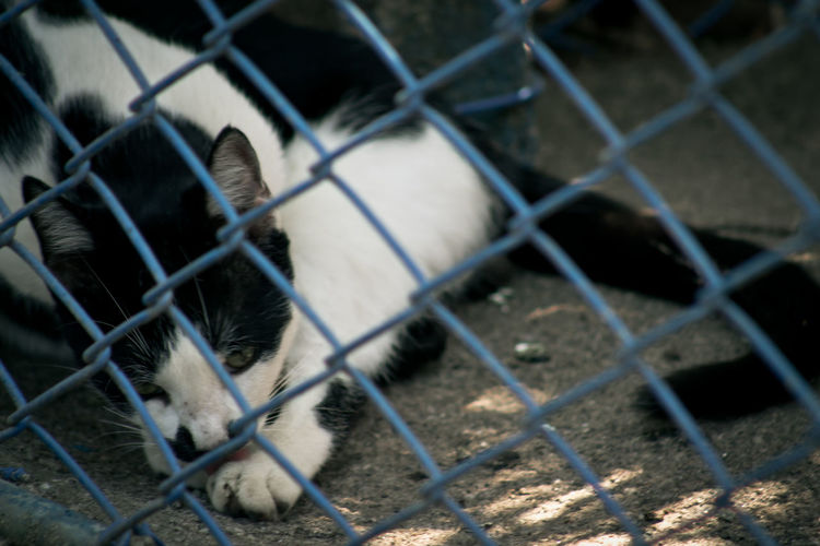 Cats relaxing on footpath seen through chainlink fence